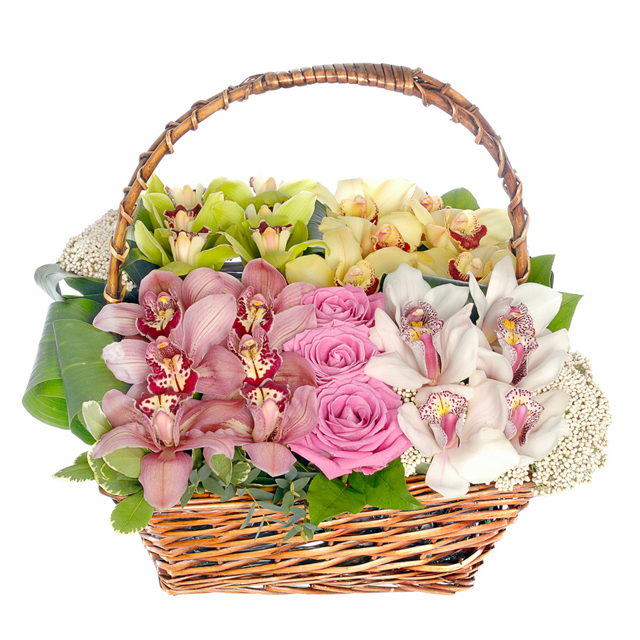 Orchid basket mix