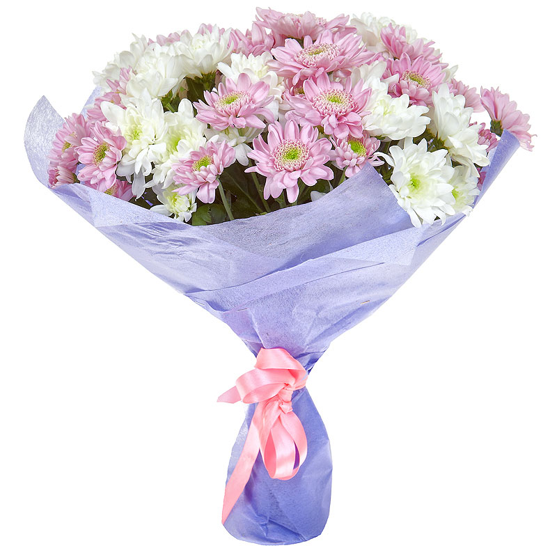 Bouquet of 9 white-pink chrysanthemums