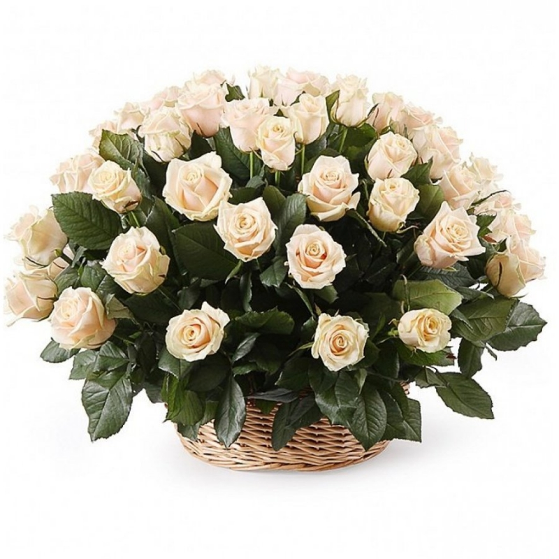 Basket of 55 roses Talea