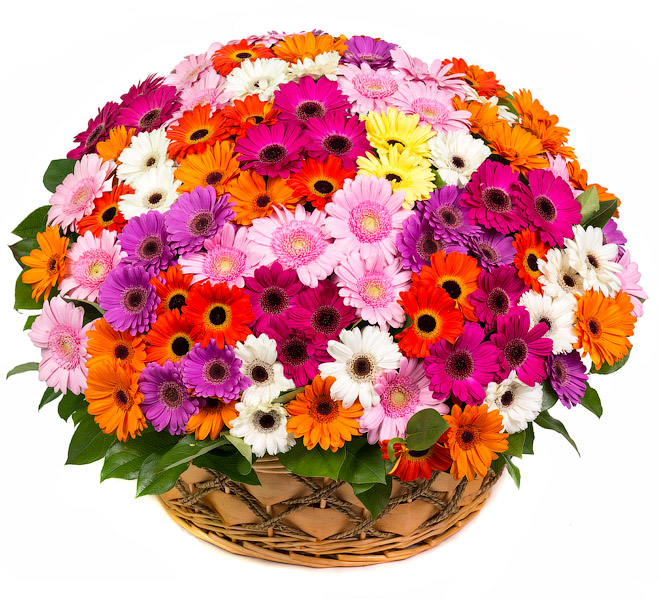 Basket 201 gerbera mix