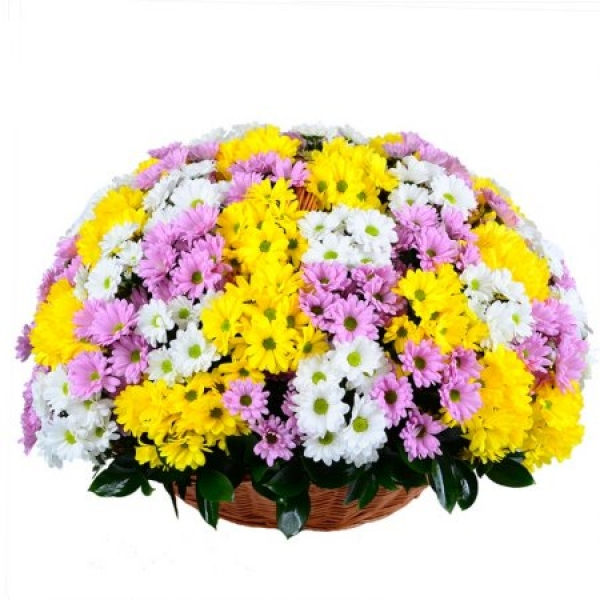 Basket of 59 chrysanthemums mix