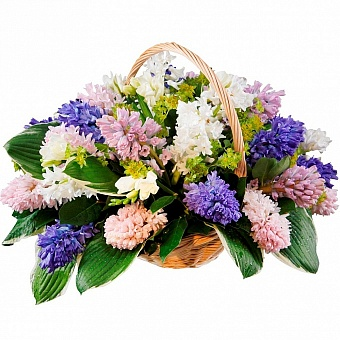 Basket hyacinth
