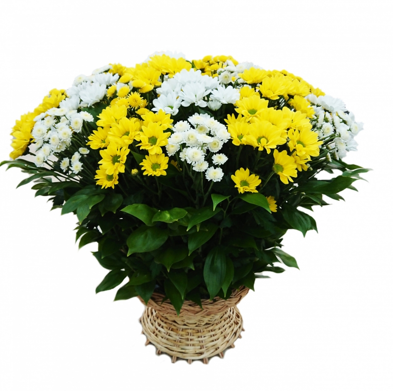 Basket with chrysanthemums mix